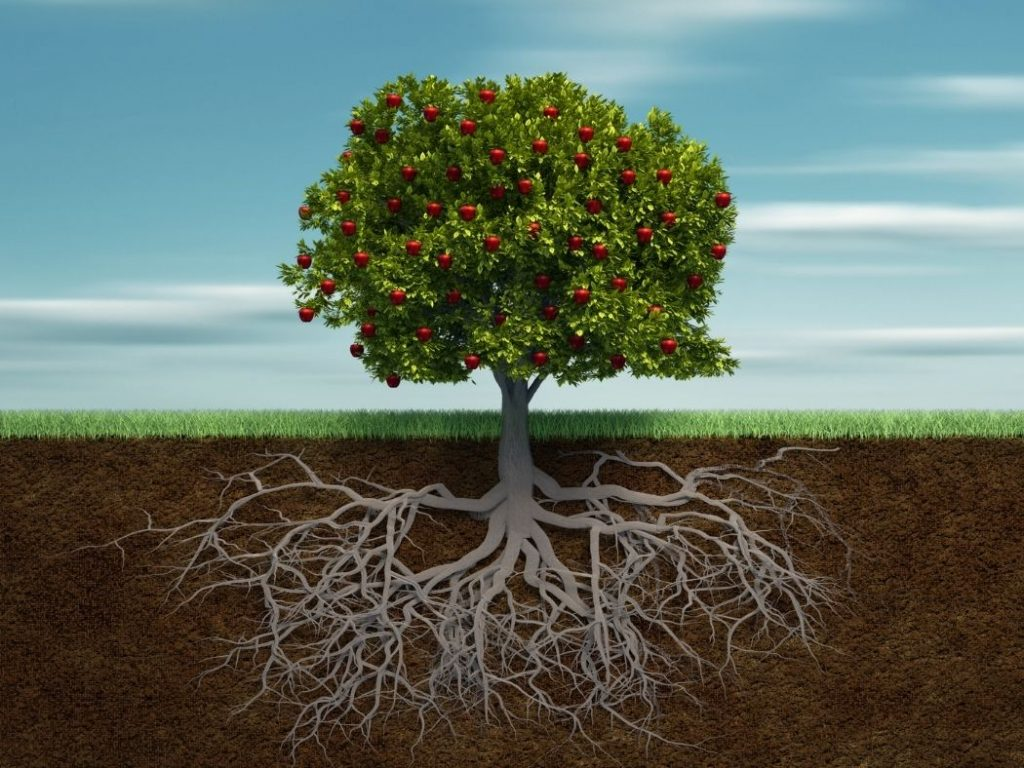 rooted in agriculture